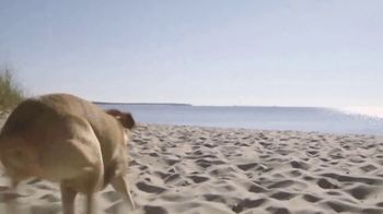 PETCO Foundation TV Spot, 'Adopt a Love' - Thumbnail 2