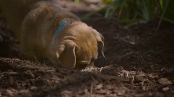 PETCO Foundation TV Spot, 'Adopt a Love' - Thumbnail 4