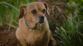 PETCO Foundation TV Spot, 'Adopt a Love' - Thumbnail 7