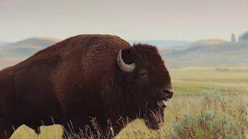 Buffalo Wild Wings TV Spot, 'March Madness: Celebrating' - Thumbnail 6
