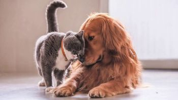 Banfield Pet Hospital TV Spot, 'Best Friend'