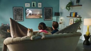 GEICO TV Spot, 'Animal Planet: Modern Catemporary' - Thumbnail 1