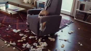 Capital One Walmart Rewards Card TV Spot, 'Puppy Problems'