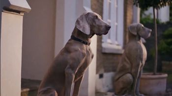 Heartgard Plus TV Spot, 'Any Dog at Any Time'