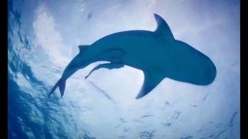 Georgia Aquarium TV Spot, 'Shark Membership'