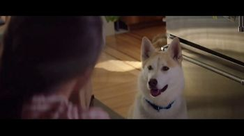 Amazon Prime TV Spot, 'Holidays: Dog' - 512 commercial airings