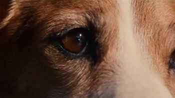 Land Rover Own the Adventure Sales Event TV Spot, 'A Dog's Dream' Song by Dom James [T2] - Thumbnail 7