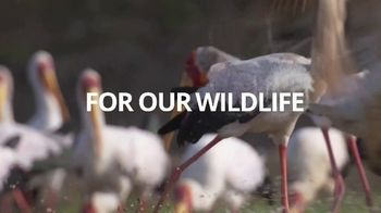 World Wildlife Fund TV Spot, '2020 Earth Hour: For Our Earth' - Thumbnail 7