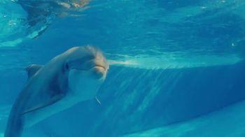 SeaWorld 2020 Fun Card TV Spot, 'Real Feels Amazing: 2020 Fun Card' - Thumbnail 1