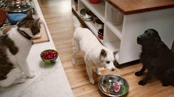 Rachael Ray Nutrish TV Spot, 'Test Kitchen' Featuring Rachael Ray - Thumbnail 6
