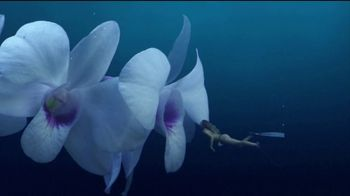 Cayman Islands Department of Tourism TV Spot, 'Dream: Snorkel in Flowers'