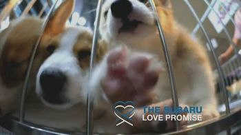Subaru TV Spot, 'PBS: Committed to Making the World a Better Place' [T2] - Thumbnail 3