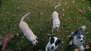 Shipt TV Spot, 'Over-Delivering Delivery: Dogs'