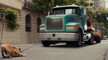 Iams TV Spot, 'Teddy'