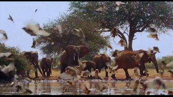 Apple TV+ TV Spot, 'The Elephant Queen' - Thumbnail 4