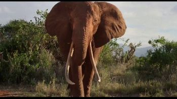 Apple TV+ TV Spot, 'The Elephant Queen' - 102 commercial airings