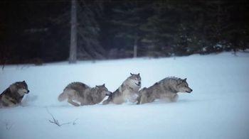 Blue Buffalo BLUE Wilderness TV Spot, 'Snow Wolf: Rocky Mountain Recipe' - Thumbnail 2