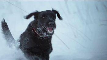 Blue Buffalo BLUE Wilderness TV Spot, 'Snow Wolf: Rocky Mountain Recipe' - Thumbnail 4