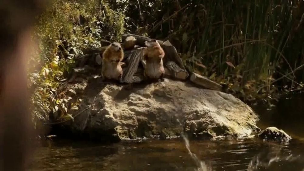 GEICO TV Commercial, 'Woodchucks Sequel: Coffee' - iSpot.tv
