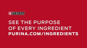 Purina TV Spot, 'Pet Food Without Artificial Flavors or Preservatives' - Thumbnail 7