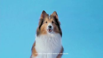 Purina Pro Plan Veterinary Diets Calming Care Probiotic Dog Supplement TV Spot, 'Excessive Barking' - Thumbnail 7