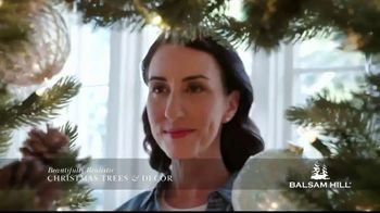 Balsam Hill Biggest Sale of the Season TV Spot, 'This Tree: Up to 50 Percent Off' - Thumbnail 6