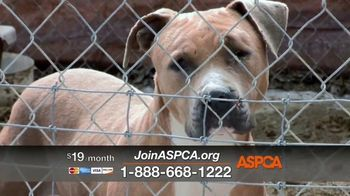 ASPCA TV Spot, 'The Winter Cold' - Thumbnail 6