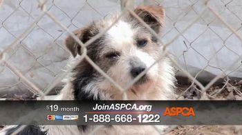 ASPCA TV Spot, 'The Winter Cold' - Thumbnail 7