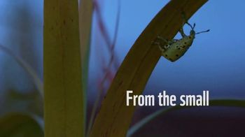 World Wildlife Fund TV Spot, 'From the Small to the Big' - Thumbnail 2