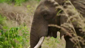 World Wildlife Fund TV Spot, 'From the Small to the Big' - Thumbnail 3