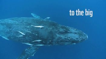 World Wildlife Fund TV Spot, 'From the Small to the Big' - Thumbnail 4
