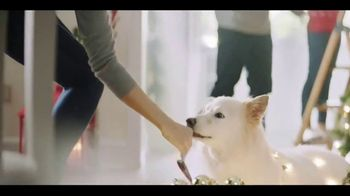 Chewy.com TV Spot, 'Holidays: All I Want for Christmas' - Thumbnail 3