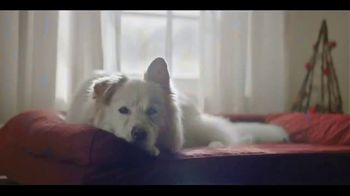 Chewy.com TV Spot, 'Holidays: All I Want for Christmas' - Thumbnail 7