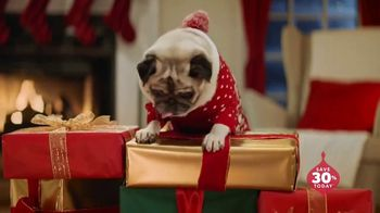 Chewy.com TV Spot, 'Holidays: Unbox Holiday Savings' - Thumbnail 9