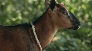 Heifer International TV Spot, 'Creating a World Without Hunger and Poverty' - Thumbnail 5