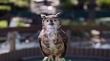 America's Best Contacts and Eyeglasses TV Spot, 'Birdie' - Thumbnail 8