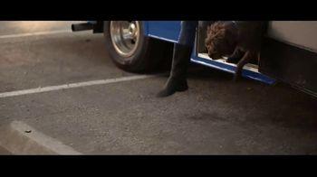 Amica Mutual Insurance Company TV Spot, 'Rescue Dog' - Thumbnail 3