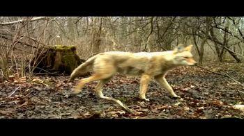 BTN LiveBIG TV Spot, 'Michigan Wildlife Survey' - Thumbnail 4