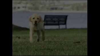 Southeastern Guide Dogs TV Spot, 'A Dog I'm Not' - Thumbnail 1