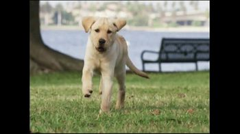 Southeastern Guide Dogs TV Spot, 'A Dog I'm Not' - Thumbnail 2