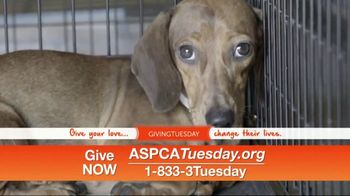ASPCA TV Spot, 'Help Animals This Giving Tuesday' - Thumbnail 10
