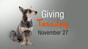 ASPCA TV Spot, 'Help Animals This Giving Tuesday' - Thumbnail 3