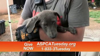 ASPCA TV Spot, 'Help Animals This Giving Tuesday' - Thumbnail 8