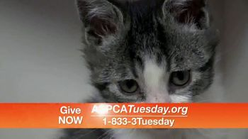 ASPCA TV Spot, 'Help Animals This Giving Tuesday' - Thumbnail 9