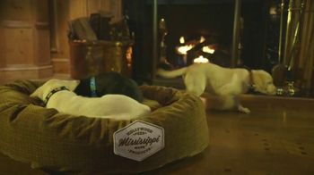 Hollywood Feed TV Spot, 'More Than Just a Dog Bed' - Thumbnail 1