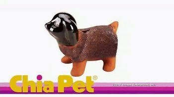 Chia Pet TV Spot, 'Holiday Pets: The Golden Girls' - Thumbnail 1