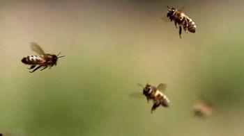 Zulily Thrill Week TV Spot, 'Bees' - Thumbnail 2