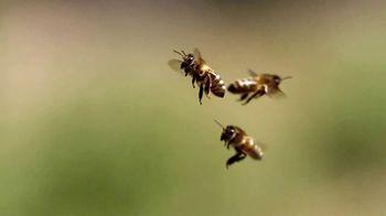 Zulily Thrill Week: Bees thumbnail