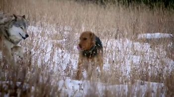 Blue Buffalo BLUE Wilderness TV Spot, 'Wolf Dreams: Rocky Mountain Recipe'