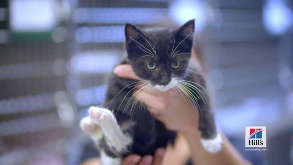 Hill's Pet Nutrition Science Diet TV Commercial, 'Lift a Pet: Clear the Shelters'